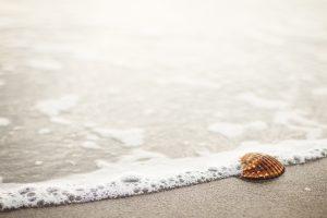 conchiglia sulla sabbia in riva al mare